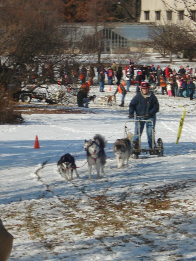 Dog sledding at Morton Arboretum. Photo by Laurie Borman